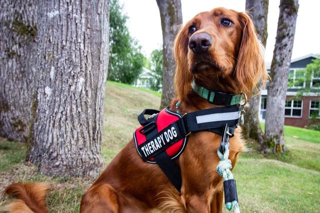 Dogs for seniors in Oakville Retirement Residence